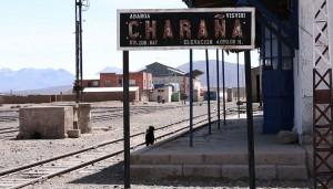 charana station & dog-sm