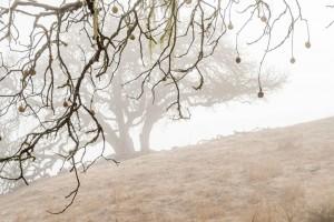 Buckeye branch in fog